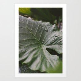 green in rain Art Print