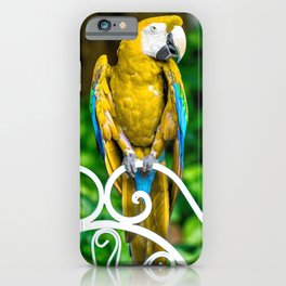 Macaw3 iPhone Case