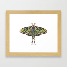 Spanish Moon Moth (Graellsia isabellae) Framed Art Print
