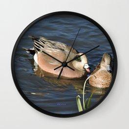 American Wigeons Wall Clock