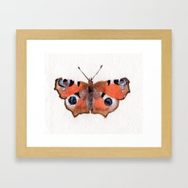 Peacock Butterfly Framed Art Print