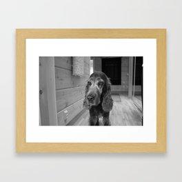 Sad Dog Framed Art Print