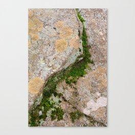 Yin Yang Moss Stone Canvas Print