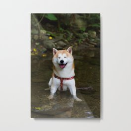 KUMA: Shiba In River 2 Metal Print