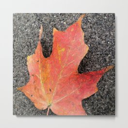Water color of a sugar maple leaf Metal Print
