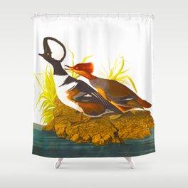 Hooded Merganser John James Audubon Scientific Illustration Birds Of America Drawings Shower Curtain