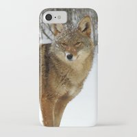 coyote iPhone & iPod Cases featuring Coyote by tracy-Me
