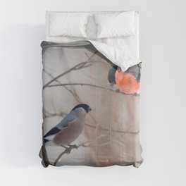 Couple of bullfinch birds Comforters