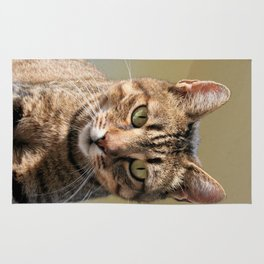 Portrait Of A Cute Tabby Cat With Direct Eye Contact Rug