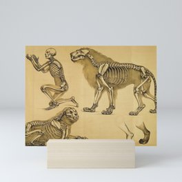 Anatomical skeletal studies human and lion Mini Art Print