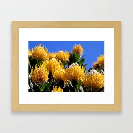 Beautiful Protea in South Africa Framed Art Print