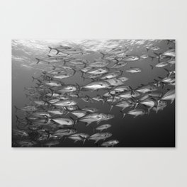 Following the Crowd Canvas Print