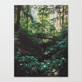 McCormick's Creek State Park Canvas Print