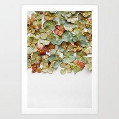 Hydrangea Petals no. 2 Art Print