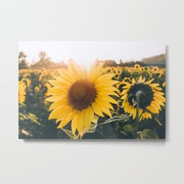 Golden Sun, III Metal Print