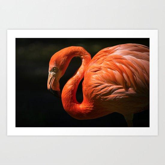 Flamingo photo Art Print