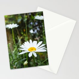 Daisy Flower - Plants Photography Stationery Cards