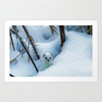 Winter weasel Art Print
