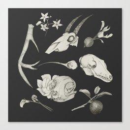 Bones and Botanical Sketches Canvas Print