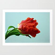 American Tulip Art Print