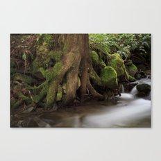 Paradise Creek II Canvas Print