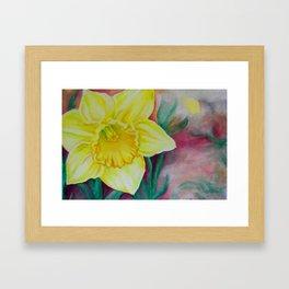 Daffodil (*Koinonia*) Framed Art Print