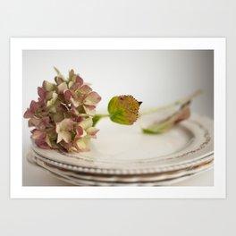 Hydrangea Flower on Vintage Plates Art Print