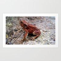 frog Art Prints featuring frog. by zenitt
