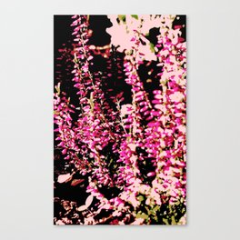 Heide Erika Calluna Vulgaris Canvas Print