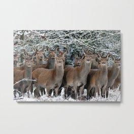 Herd Of Deer Metal Print