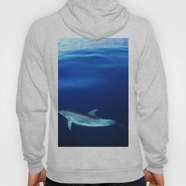 Dolphin, blue and sea Hoody