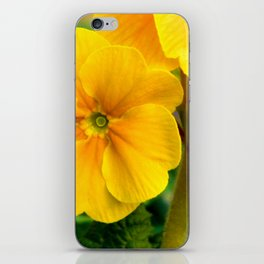 Yellow Heartsease Flower iPhone Skin