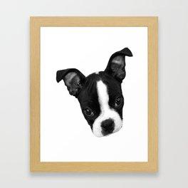 Boston Terrier Puppy Framed Art Print