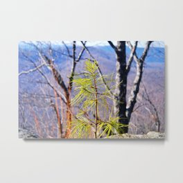 Sapling Metal Print