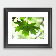 Acer Leave  4356 Framed Art Print
