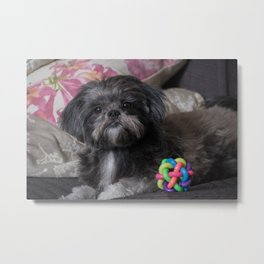 Little dog with her ball Metal Print