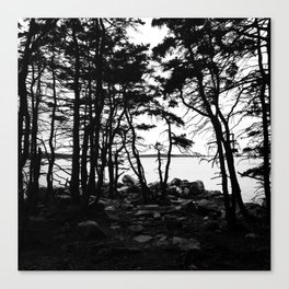 Acadia Trees Canvas Print