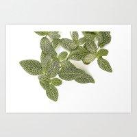 Nerve Plant Art Print