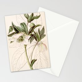 Helleborus orientalis Stationery Cards