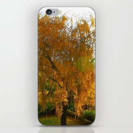 Our Golden Willow iPhone Skin
