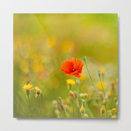 poppy flower in a field in summer Metal Print