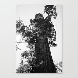 Sequoia National Park IX Canvas Print