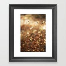 Fields Of Glory Framed Art Print