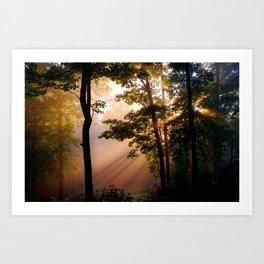 Forest Light Fine Art Print, Magical Forest, Nature Print Art Print