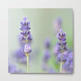 lavender I Metal Print