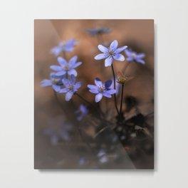 Blue liverworts Metal Print