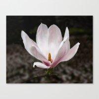 magnolia Canvas Prints featuring Magnolia by Guna Andersone & Mario Raats - G&M Studi