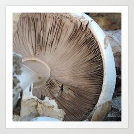 TEXTURES -- Mushroom Uprooted Art Print