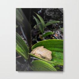 Mud Frog Metal Print