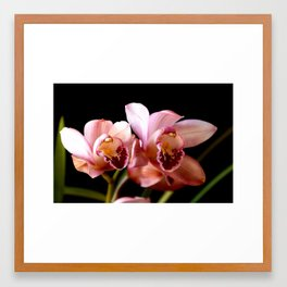 sweetness of the orchid Framed Art Print